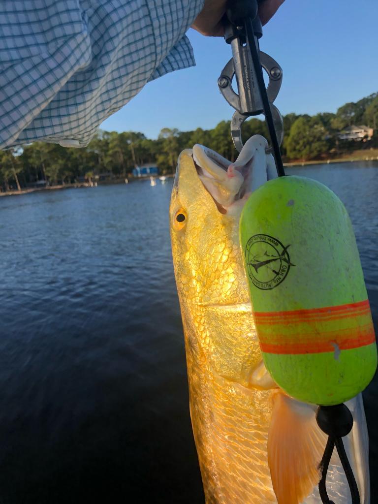 Redfish bite on Boggy Bayou-image-2-jpg