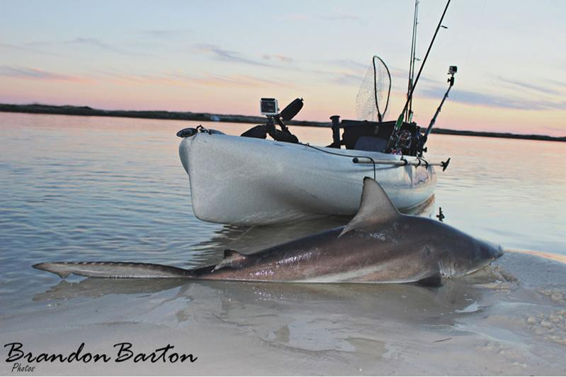 Shark on topwater(video)-image-2121573708-jpg