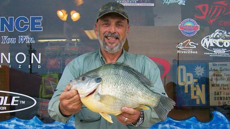 Monster shellcracker pensacola fishing forum for Shell cracker fish