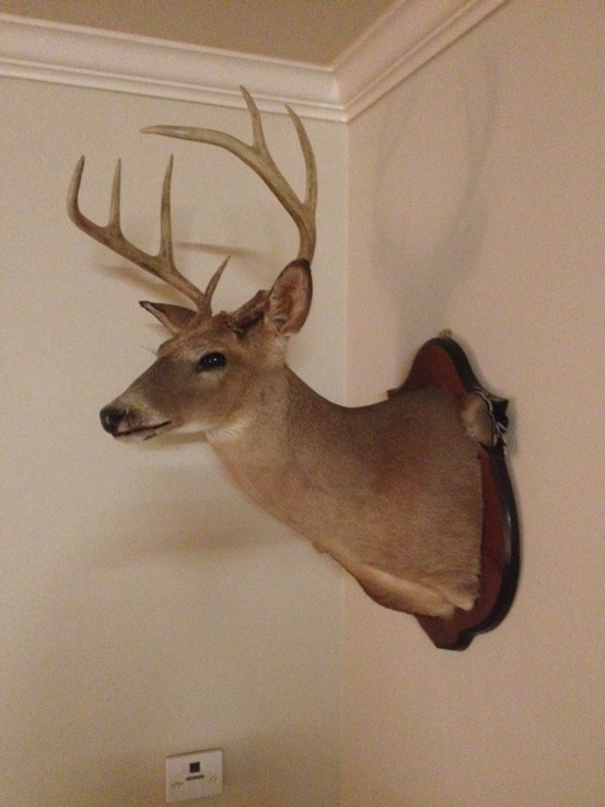 Let's see everybody's biggest buck to date-image-2766591060-jpg