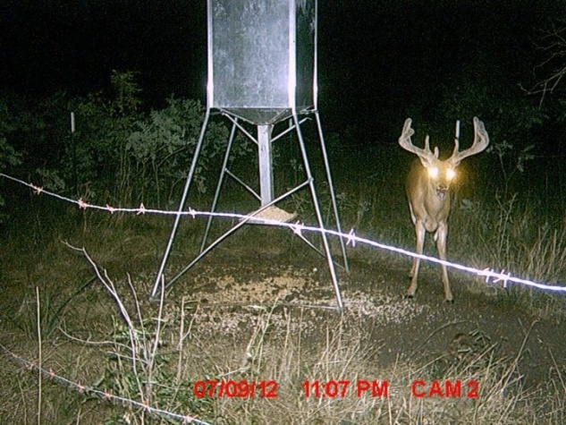 Another great one showed up on the game cam!-image-3245433509-jpg
