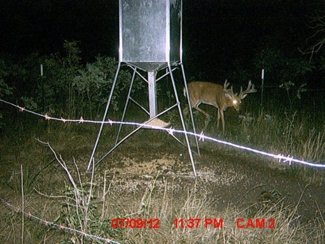 Another great one showed up on the game cam!-image-4064857335-jpg
