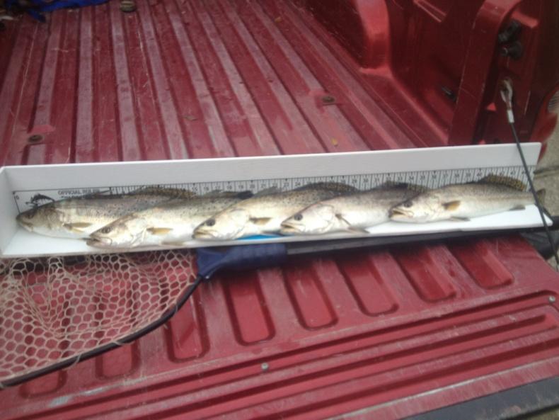 12/29/12 trout bite-image-554601764-jpg