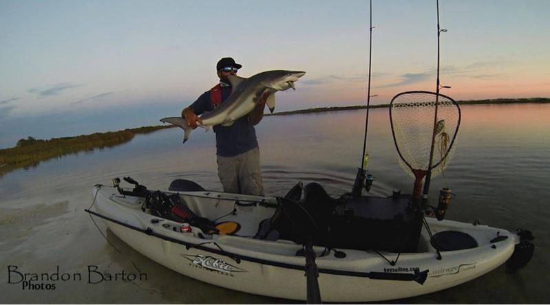Shark on topwater(video)-image-706244731-jpg
