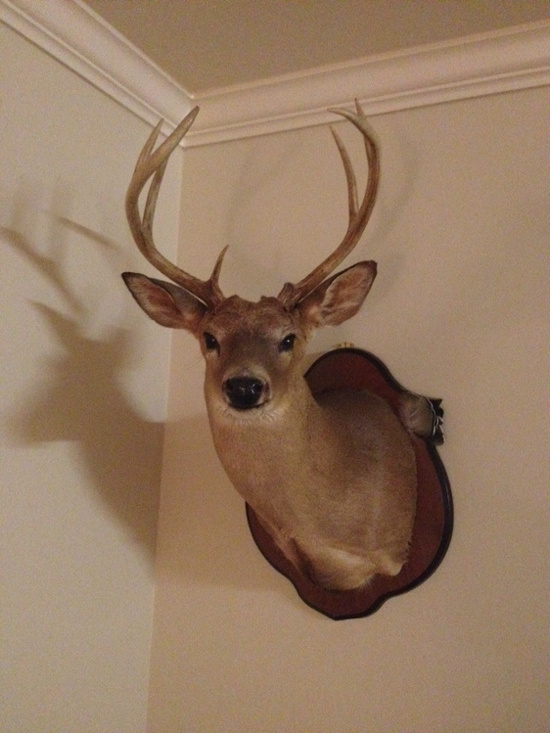 Let's see everybody's biggest buck to date-image-925338320-jpg