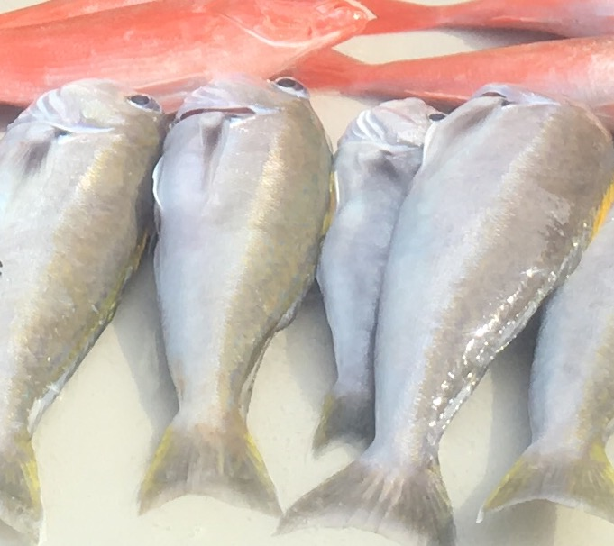 Fish Id-image-jpeg