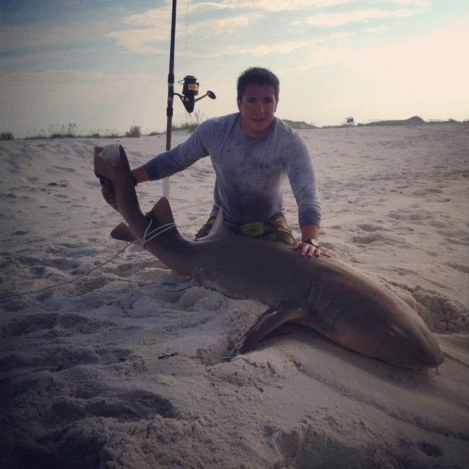 Shark bait-image-jpg