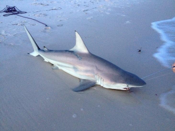 Johnson's Beach 8-21-2013 (after work sharking report)-image-jpg