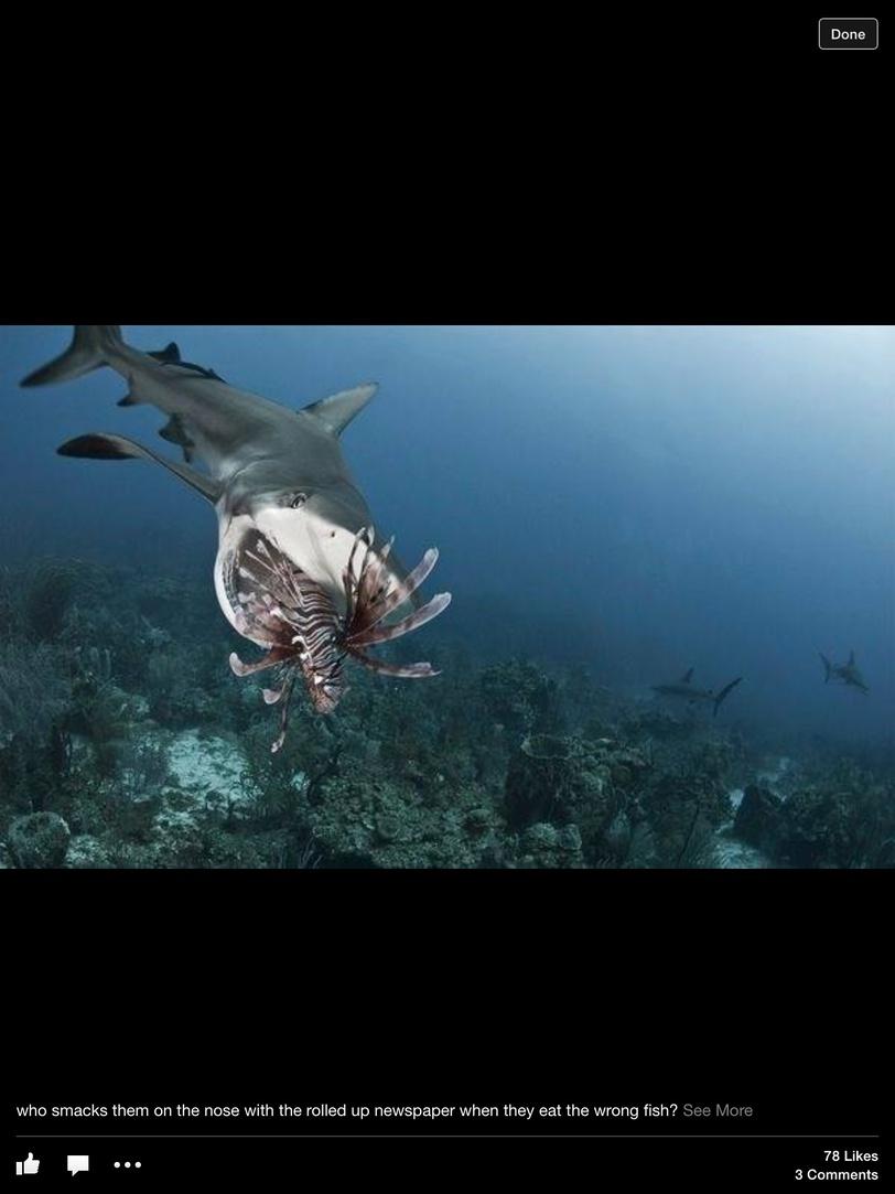 Lionfish hope?-image-jpg