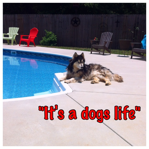 Lucky Dog!!!-image-jpg