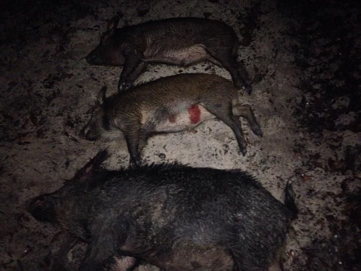 Pig slaying!-image-jpg