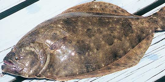 New Flounder Light Give Away-image-jpg