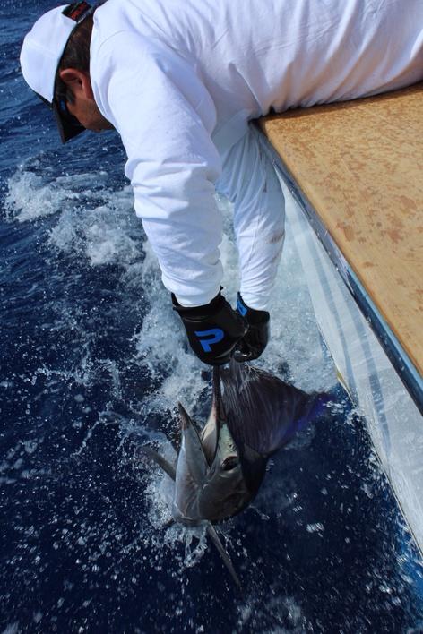 Blue Marlin, Sailfish, Tuna, Wahoo, Dorado....-image-jpg