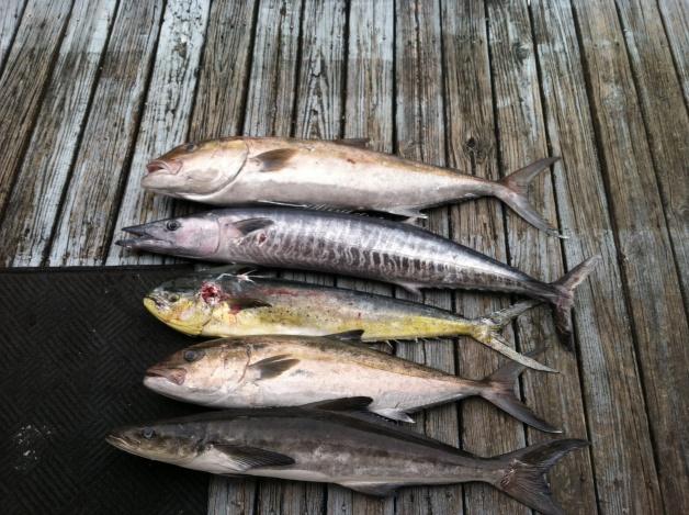 Bottom fishing and trolling-image-jpg