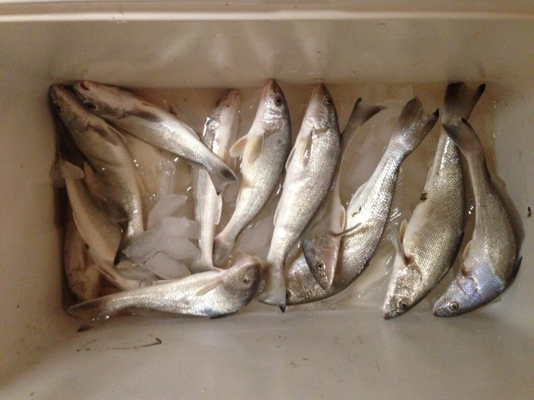 12 Whiting on Dauphin Island Father's Day-image-jpg