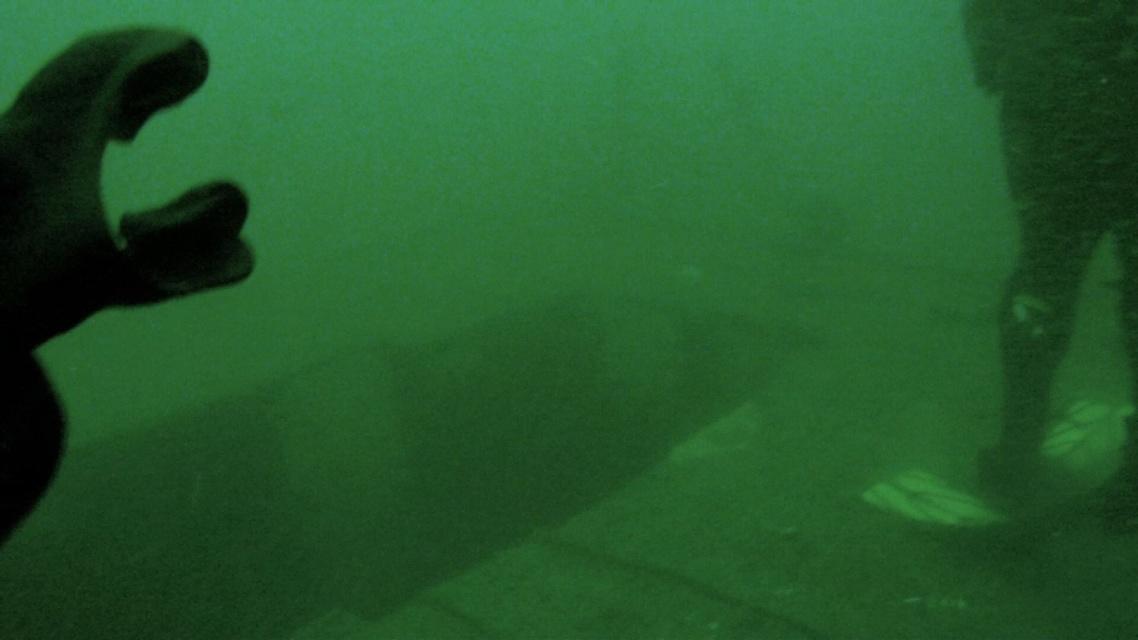Jan. 15th dive - More AJ's & Sheephead-image1-jpg