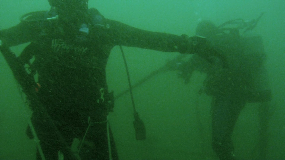 Jan. 15th dive - More AJ's & Sheephead-image2-jpg