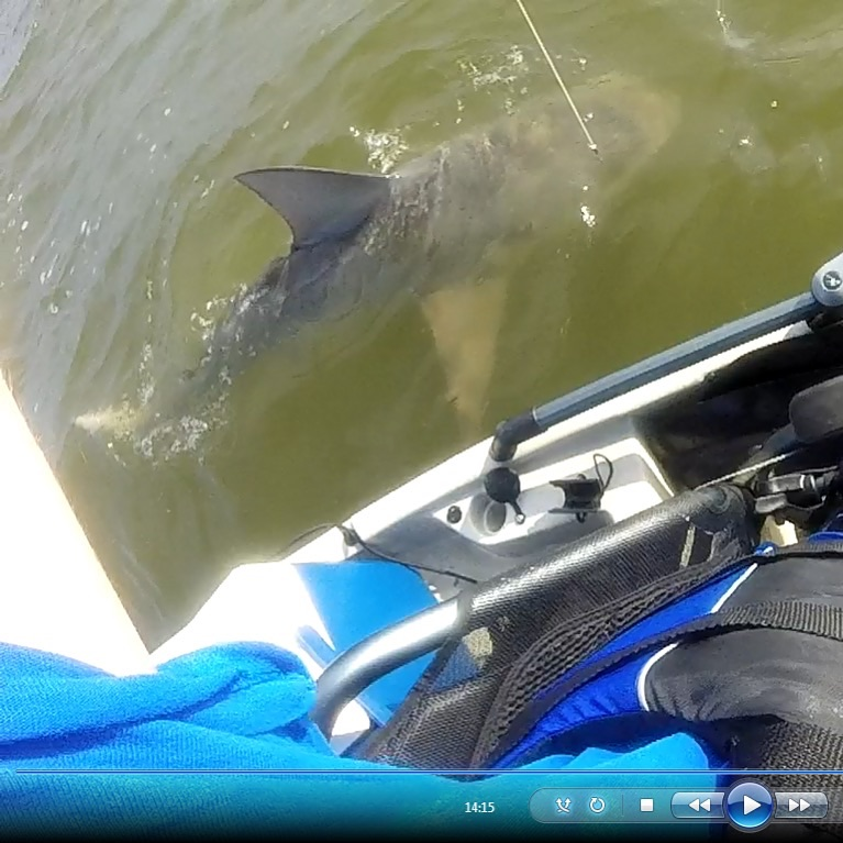7 foot bull shark from the yak-image_1462244838298-jpg