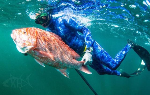 Opening Day - Freedive Spearing - Nice Snapper-imageuploadedbytapatalk1432613070-538479-jpg