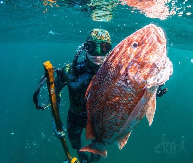 Opening Day - Freedive Spearing - Nice Snapper-imageuploadedbytapatalk1432613079-895853-jpg
