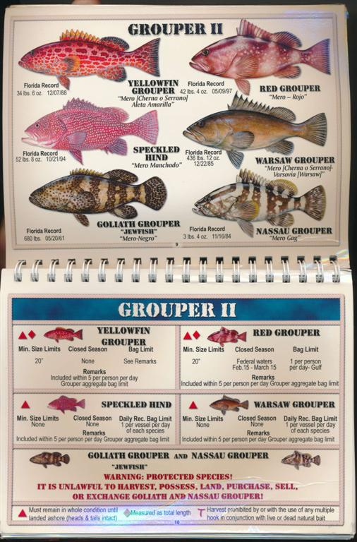 Fish size chart fl all the best fish in 2017 florida r fish size limits sciox Images