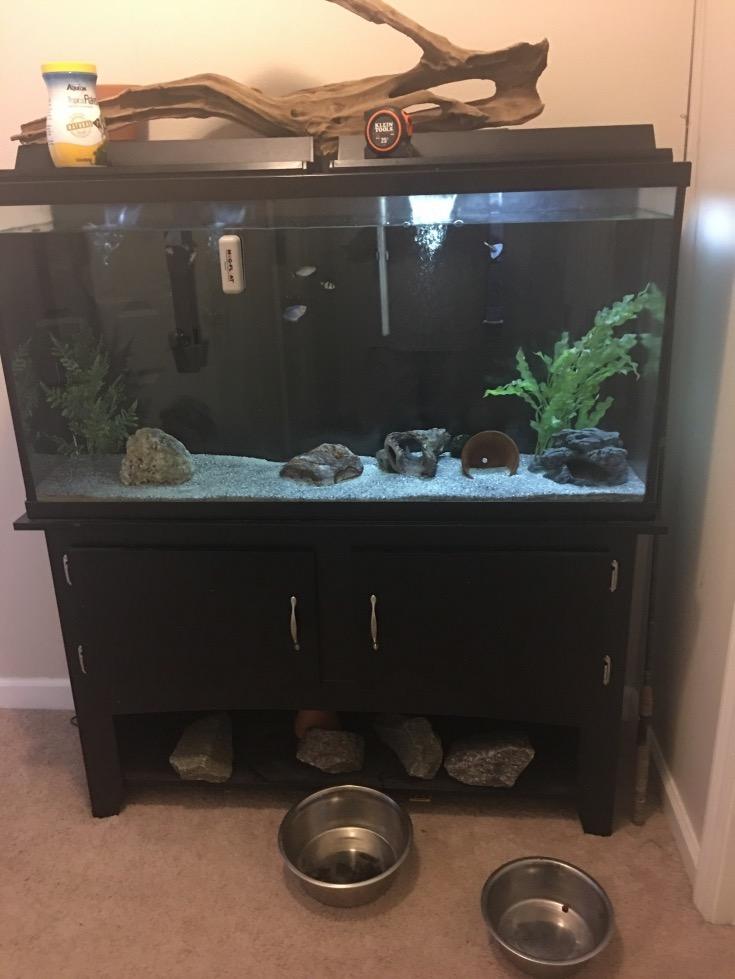 60gal Aquarium Pensacola Fishing Forum