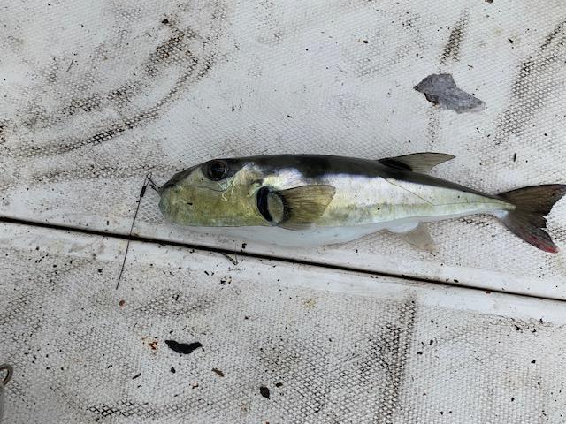 Fish ID-img_0454-jpg