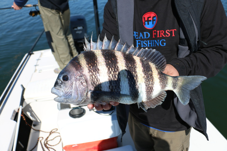 Winter Trout and Sheepshead in Tampa Bay-img_0876-jpg