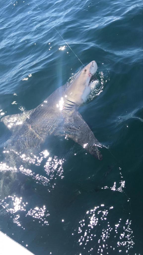 Shark ID help-img_1035_1560780416956-jpg