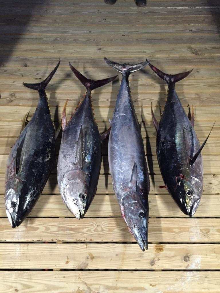 Wahoo and Tuna Vioska Knoll Area 2/5-img_1222-jpg