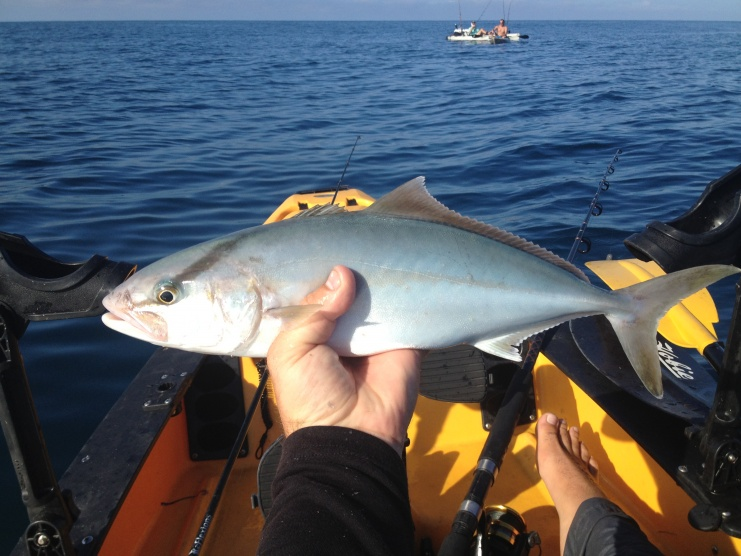 Sailfish and some beast red snapper-img_1597%5B1%5D-jpg