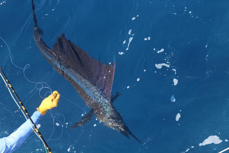 Experienced Bluewater Fisherman Looking for Ride-img_1886-jpg