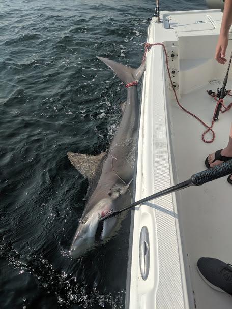 Pensacola Beach Fishing Report 06-07-19-img_20190603_082724-jpg