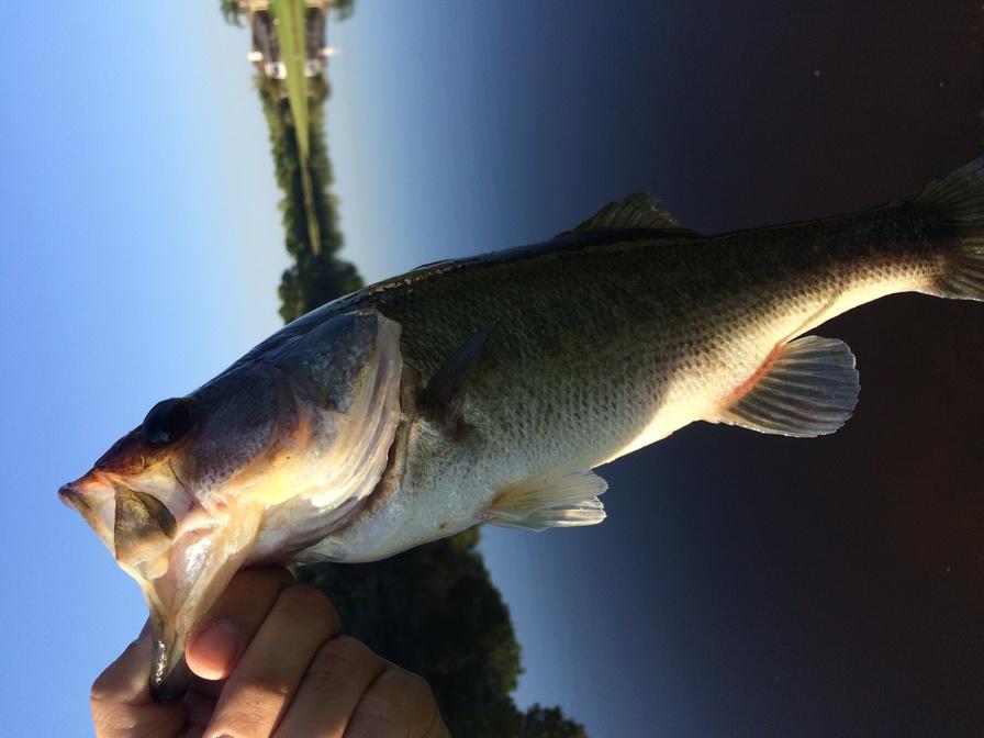 I'm back and been fishin!!!!-img_2093-jpg