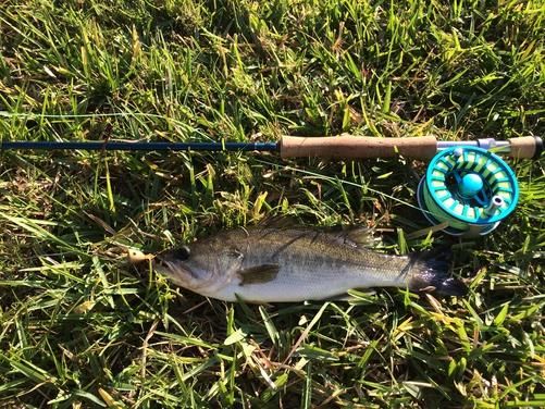 I'm back and been fishin!!!!-img_2094-jpg