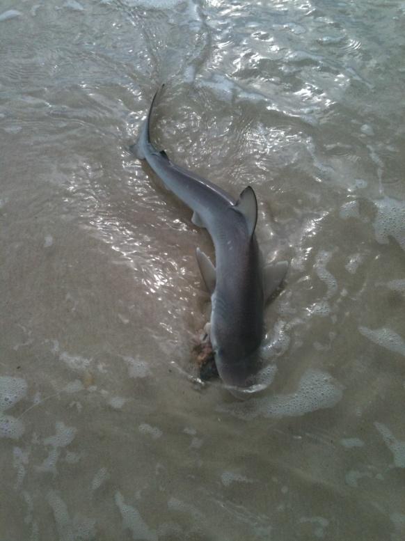 fish id?-img_2111-jpg