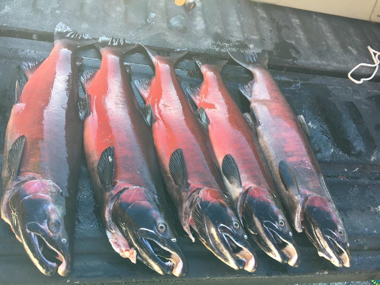 Alaskan Update!-img_2482-jpg
