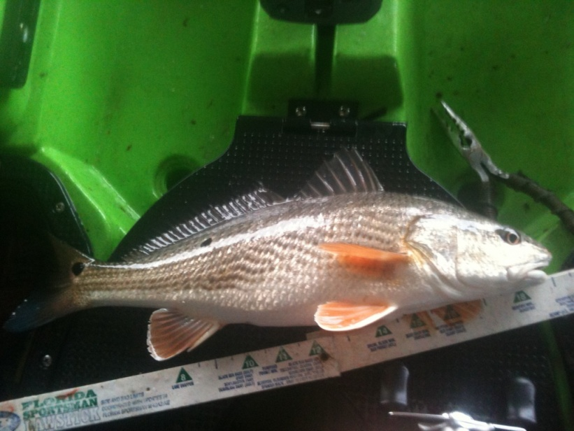 fishing report,past 2 weekends-img_2708-jpg