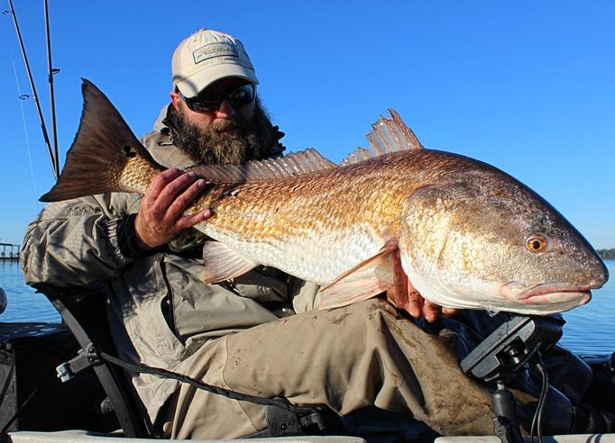 Upper Bay Bull Reds! 12-20-15-img_3935_pe-jpg