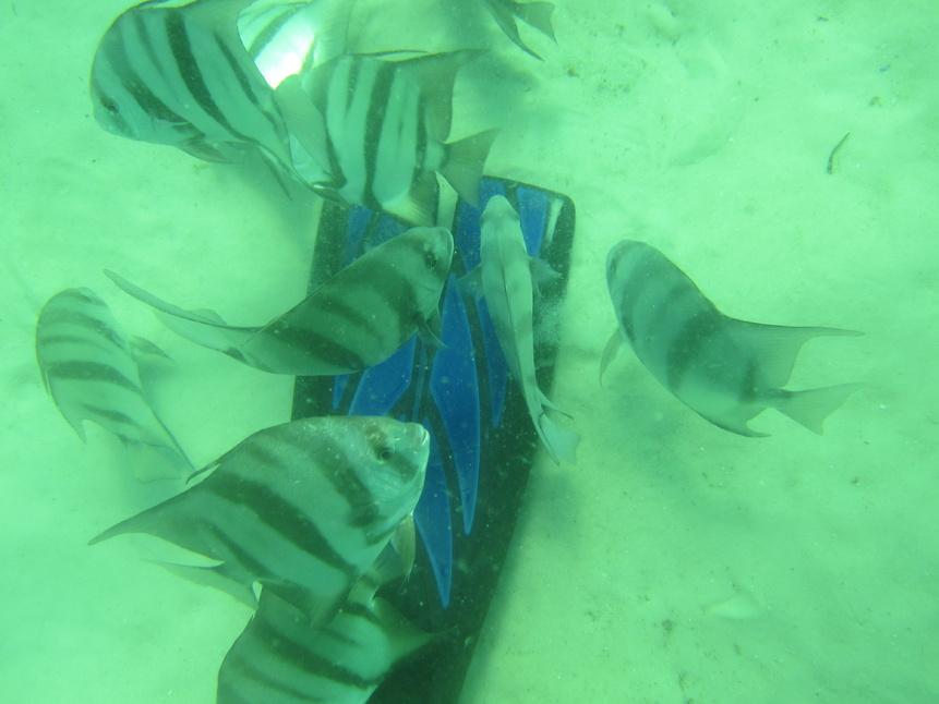 Navarre reef fun dive and natural bottom spearfishing-img_4513-jpg