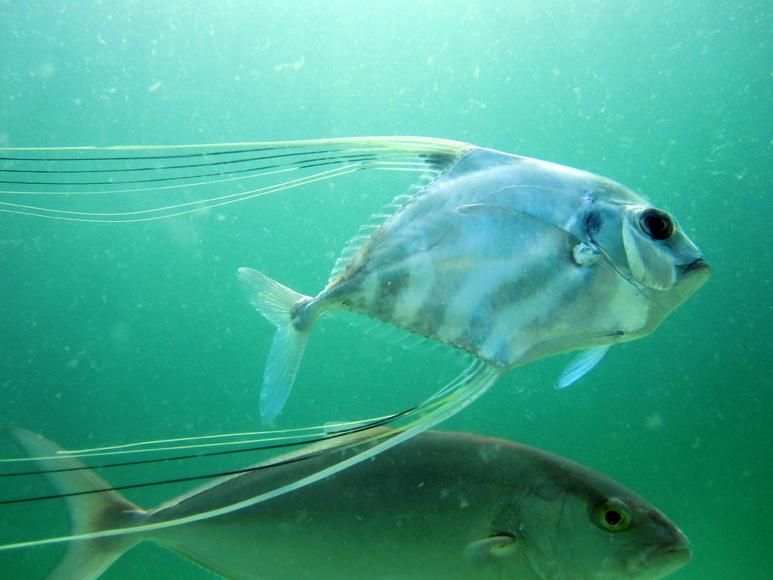 Navarre reef fun dive and natural bottom spearfishing-img_4521-jpg