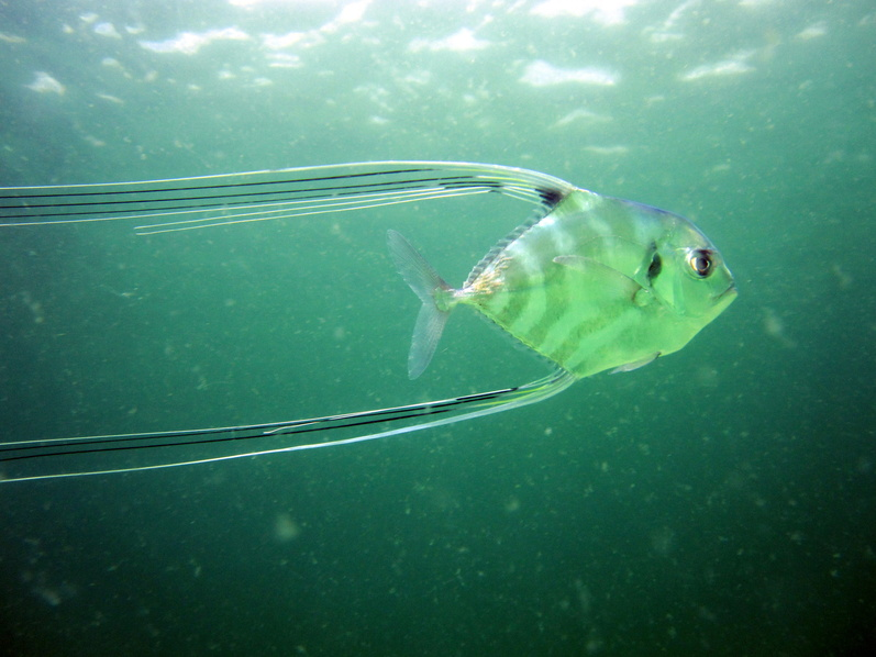 Navarre reef fun dive and natural bottom spearfishing-img_4523-jpg