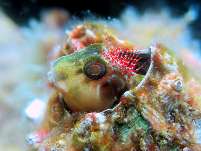 Navarre reef fun dive and natural bottom spearfishing-img_4541-jpg