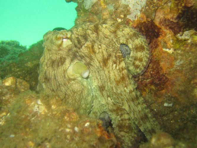 Navarre reef fun dive and natural bottom spearfishing-img_4544-jpg