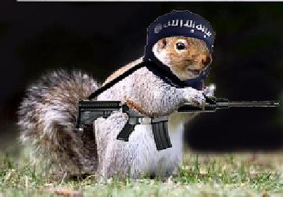As new attack by Squirrel?-isis_squirrel-jpg
