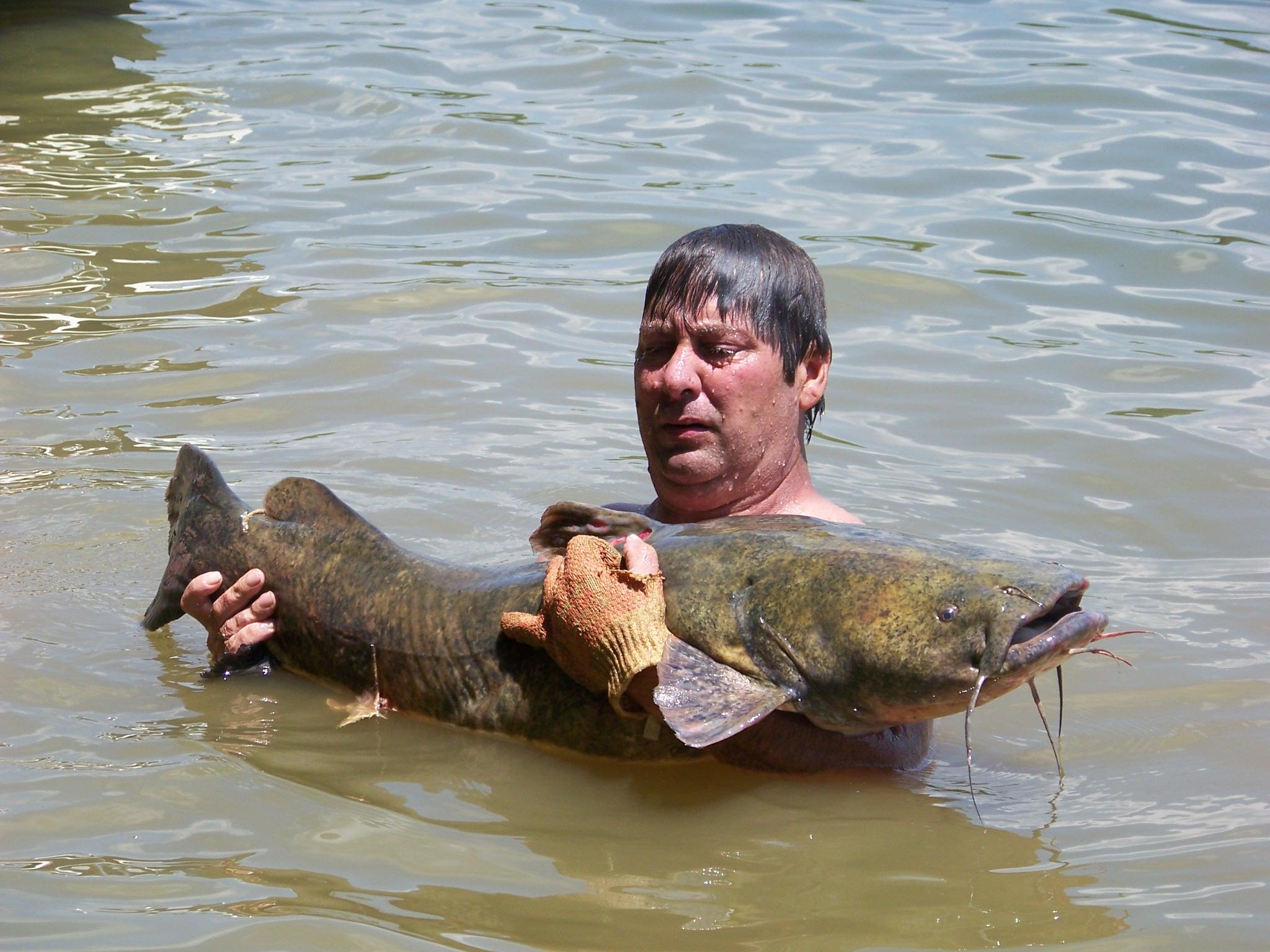 Decent catfish-june-12-004-jpg