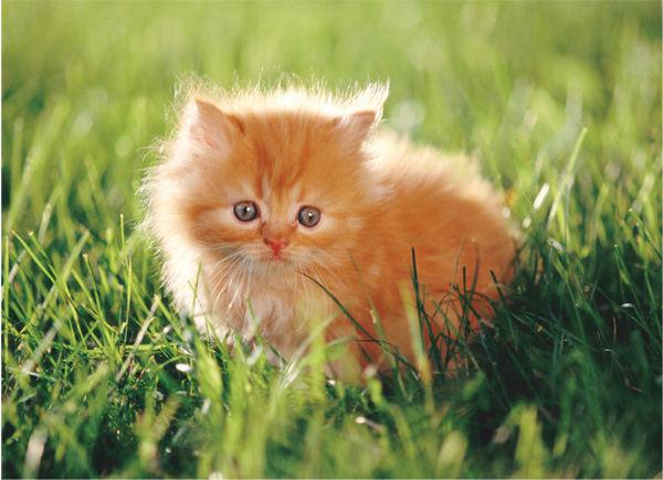 Rescued kittens from woods.-kitten-jpg