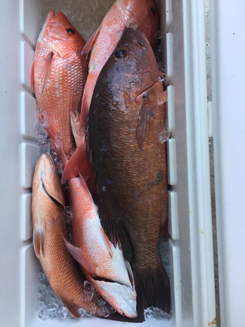 Last few days of snapper season pics-mangrove-reds-jpg