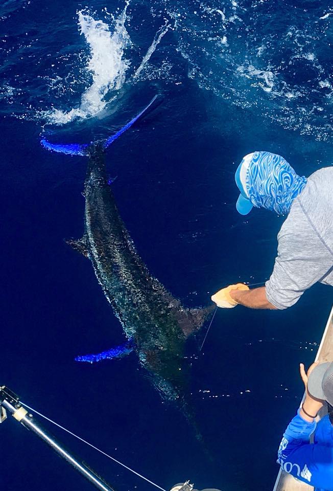 Fishing Costa Rica-marlin8-jpg