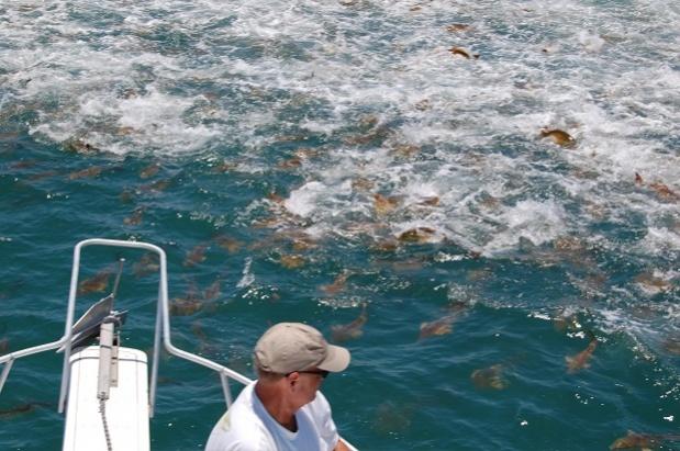Redfish-may29057-jpg